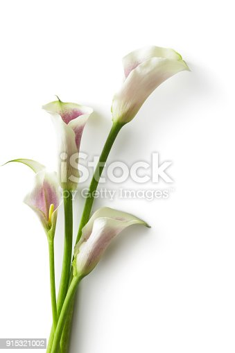 Flowers: Calla Lily Isolated on White Background