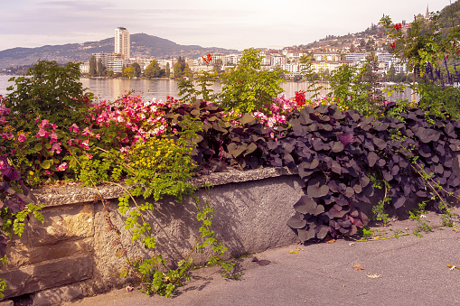 Flowers, city and lake view Montreux, Switzerland
