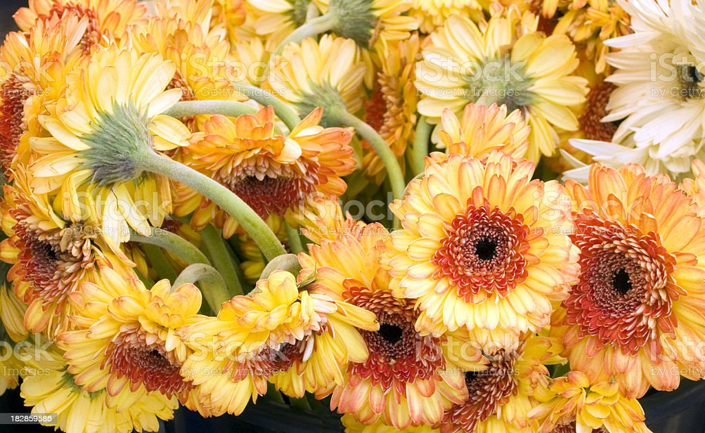 Flowers close up royalty-free stock photo