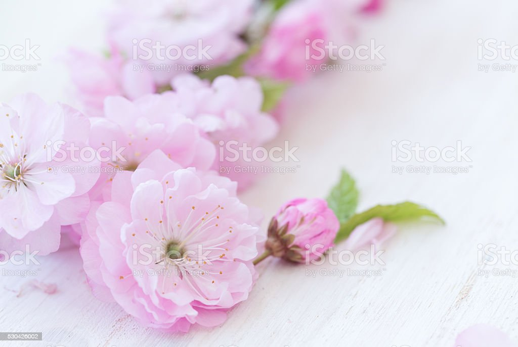 Flowers close-up on white wooden background stock photo