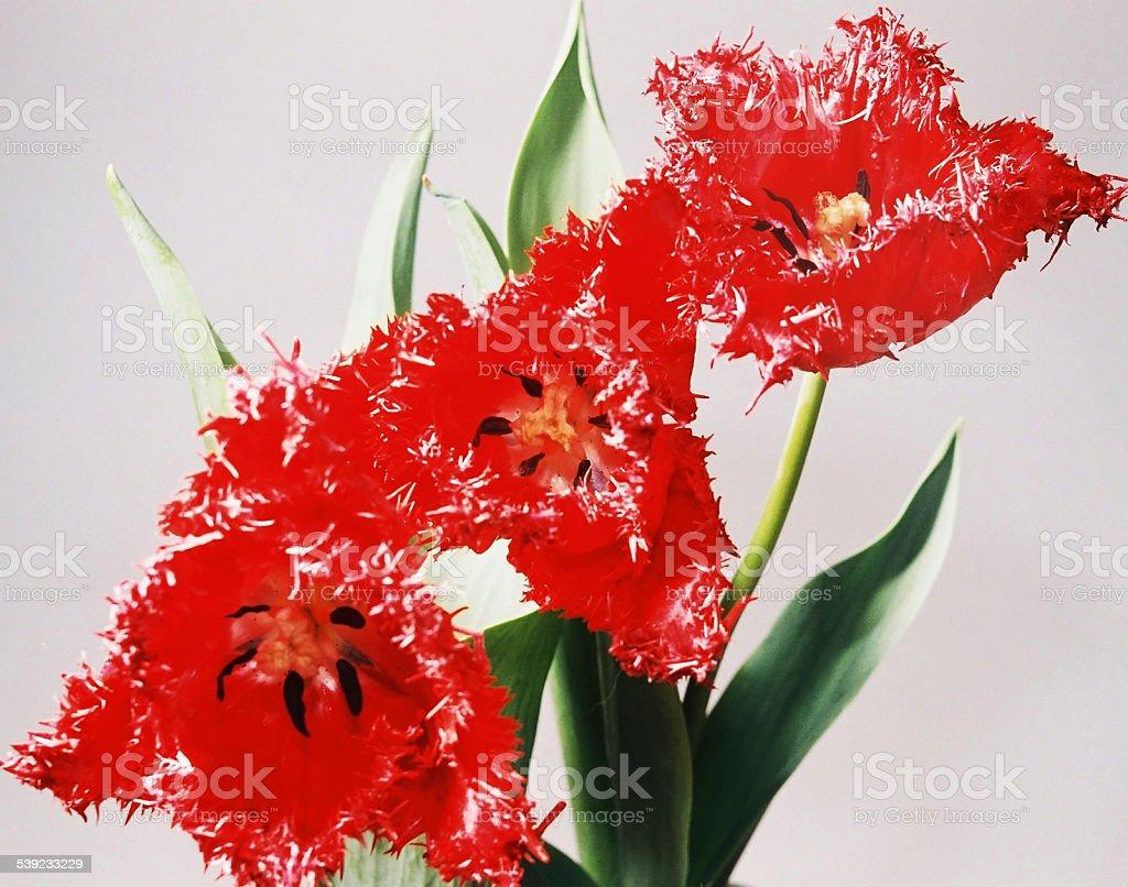Flores primer plano foto de stock libre de derechos