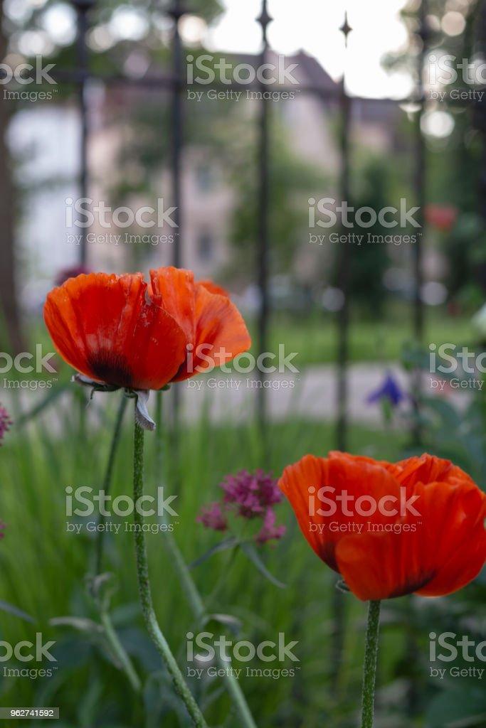 flores coloridas no parque da cidade de primavera - Foto de stock de Ajardinado royalty-free