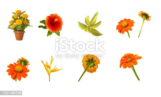 Many beauty flowers combination on white isolated back ground.