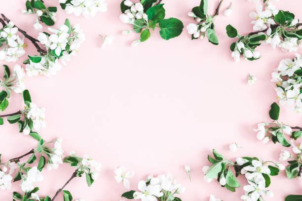 Flowers composition apple tree flowers on pastel pink background picture id1128621418?b=1&k=6&m=1128621418&s=612x612&w=0&h=xijlbqdeqgybvgdnk695crogkjaijzpslnats98hpbm=