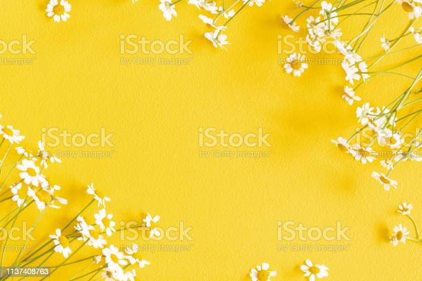 Flowers composition chamomile flowers on yellow background spring picture id1137408763?b=1&k=6&m=1137408763&s=612x612&h=vazdzc5jdst0pbgsaxw5gd90y r33joadkb1ggb4yoc=