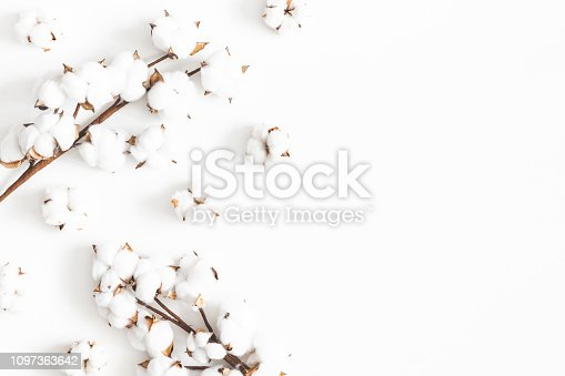 Flowers composition. Cotton flowers on white background. Flat lay, top view, copy space