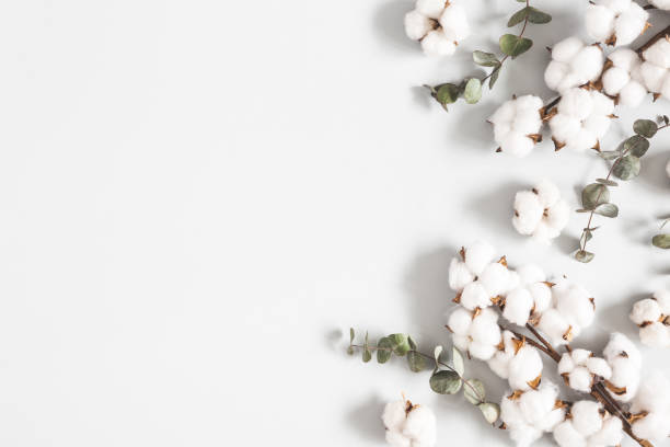 Flowers composition. Eucalyptus leaves and cotton flowers on pastel gray background. Flat lay, top view, copy space stock photo