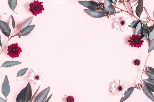 flowers composition. eucalyptus leaves and pink flowers on pastel pink background. mothers day, womens day concept. flat lay, top view, copy space - composition stock pictures, royalty-free photos & images