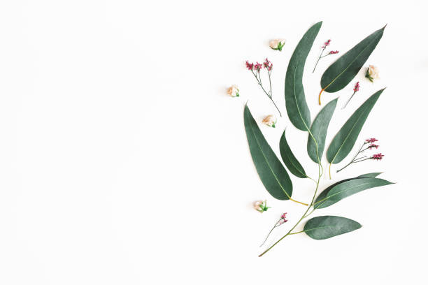 Flowers composition. Eucalyptus leaves and pink flowers on white background. Flat lay, top view, copy space stock photo