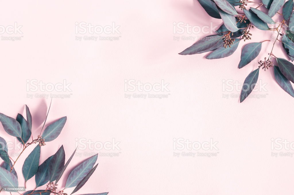 Flowers composition. Eucalyptus leaves on pastel pink background. Flat lay, top view, copy space Flowers composition. Eucalyptus leaves on pastel pink background. Flat lay, top view, copy space Above Stock Photo