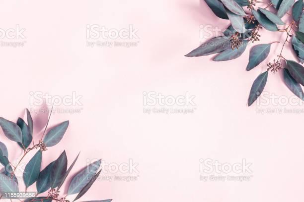 Flowers composition eucalyptus leaves on pastel pink background flat picture id1155939556?b=1&k=6&m=1155939556&s=612x612&h=jbeg wu7fi1pnunwtirkg9joe6aa219irxxeumkjrhi=