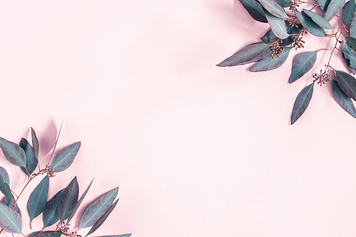 Flowers Composition Eucalyptus Leaves On Pastel Pink Background Flat Lay Top View Copy Space Stock Photo - Download Image Now
