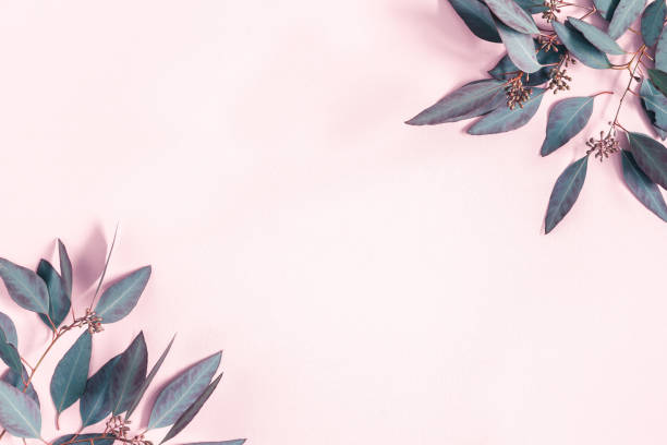 Flowers composition. Eucalyptus leaves on pastel pink background. Flat lay, top view, copy space stock photo