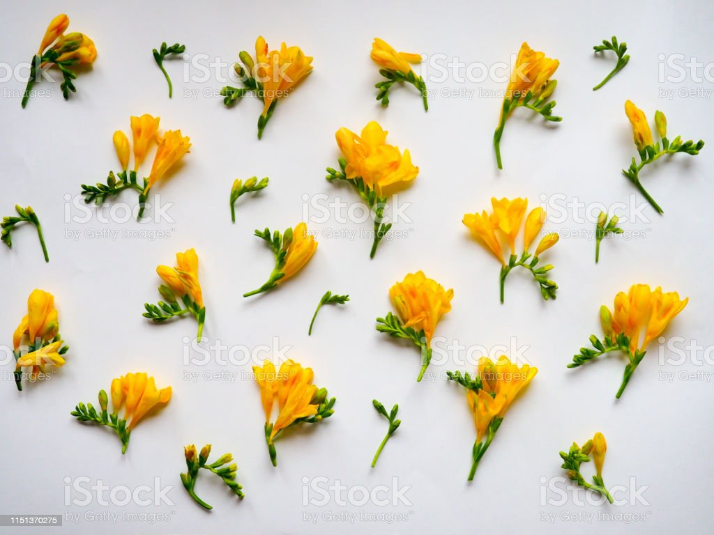 Flowers composition. Frame made of dried yellow flowers on white...