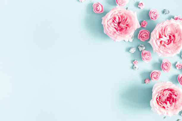flowers composition. frame made of rose flowers on pastel blue background. valentines day, mothers day, womens day, spring concept. flat lay, top view, copy space - number 8 stock pictures, royalty-free photos & images