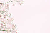 istock Flowers composition. Gypsophila flowers on pastel pink background. Flat lay, top view, copy space 1091209160