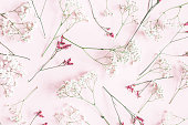 istock Flowers composition. Gypsophila flowers on pastel pink background. Flat lay, top view, copy space 1126038337