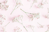 istock Flowers composition. Gypsophila flowers on pastel pink background. Flat lay, top view 1134929837