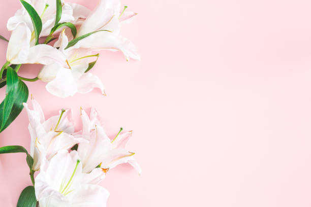 Flowers composition. Lily flowers on pastel pink background. Flat lay, top view, copy space stock photo