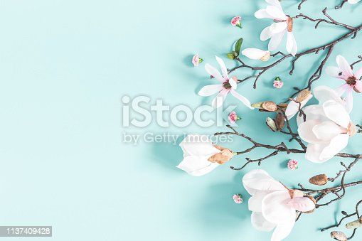 istock Flowers composition. Magnolia flowers on pastel blue background. Flat lay, top view, copy space 1137409428