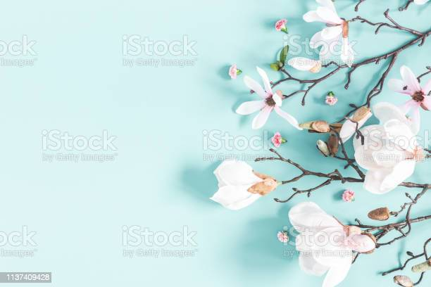 Flowers composition magnolia flowers on pastel blue background flat picture id1137409428?b=1&k=6&m=1137409428&s=612x612&h=cuvkk64qdjqnytcr8qp85dxoagjewiqjfipmlme8i84=