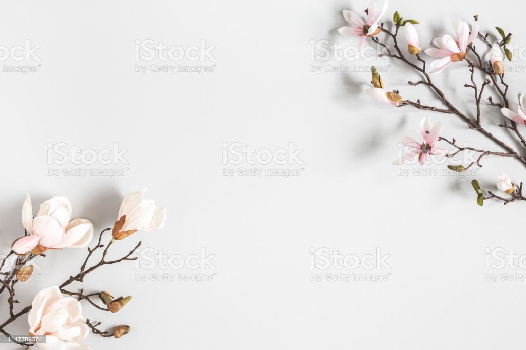 Flowers composition. Magnolia flowers on pastel gray background. Flat lay, top view, copy space Flowers composition. Magnolia flowers on pastel gray background. Flat lay, top view, copy space Above Stock Photo