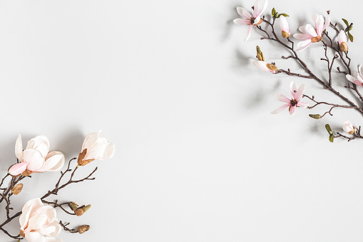 Flowers composition. Magnolia flowers on pastel gray background. Flat lay, top view, copy space