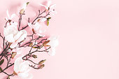 istock Flowers composition. Magnolia flowers on pastel pink background. Flat lay, top view, copy space 1138230991