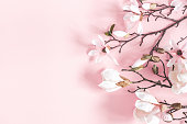 istock Flowers composition. Magnolia flowers on pastel pink background. Flat lay, top view, copy space 1139504104
