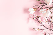 istock Flowers composition. Magnolia flowers on pastel pink background. Flat lay, top view, copy space 1141377771