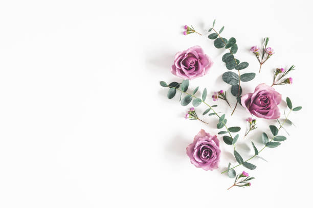 Flowers composition. Pattern made of eucalyptus branches and rose flowers on white background. Flat lay, top view, copy space Flowers composition. Pattern made of eucalyptus branches and rose flowers on white background. Flat lay, top view, copy space rose flower stock pictures, royalty-free photos & images