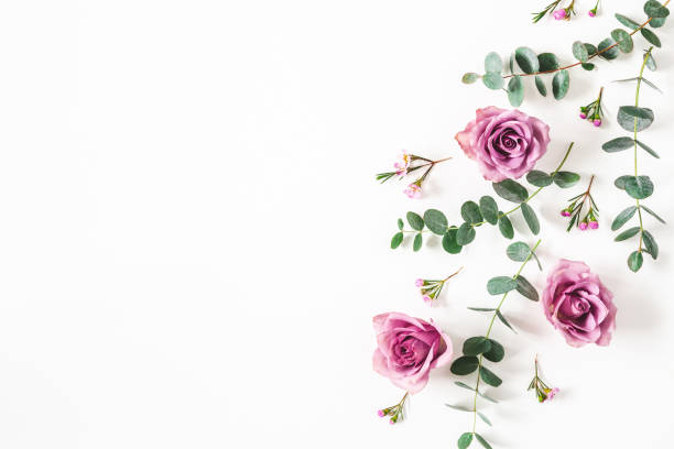 Flowers composition. Pattern made of eucalyptus branches and rose flowers on white background. Flat lay, top view, copy space stock photo