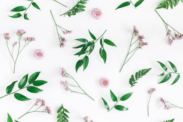 Flowers composition. Pattern made of pink flowers on white background. Flat lay, top view stock photo