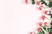 istock Flowers composition. Pink rose flowers on pastel pink background. Flat lay, top view, copy space 1136849807