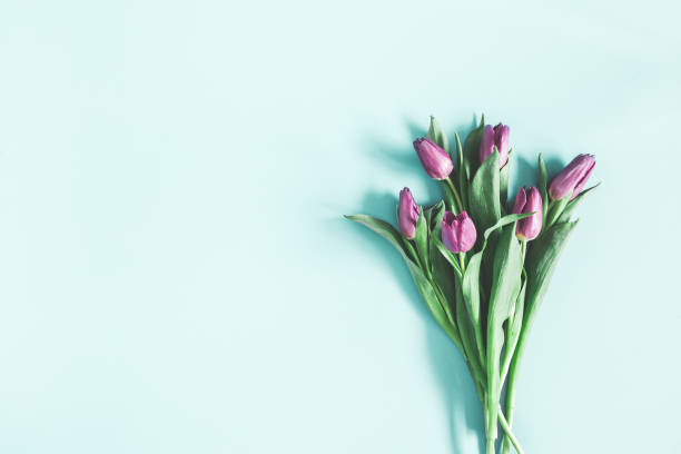 blommor sammansättning. lila tulpan blommor på pastell blå bakgrund. alla hjärtans dag, mors dag, womens dag koncept. platt lekmanna, top view, kopia utrymme - flower bouquet blue and white bildbanksfoton och bilder