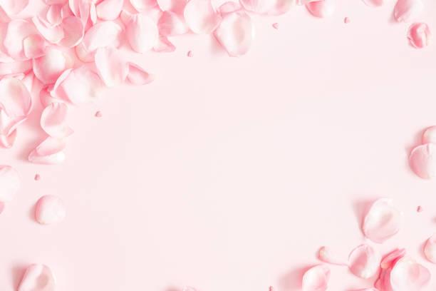 kompozycja kwiatów. płatki kwiatów róży na pastelowym różowym tle. walentynki, dzień matki, koncepcja dnia kobiet. płaski lay, widok z góry, skopiuj miejsce - różowy zdjęcia i obrazy z banku zdjęć