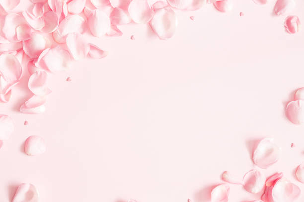 flowers composition. rose flower petals on pastel pink background. valentines day, mothers day, womens day concept. flat lay, top view, copy space - pétala imagens e fotografias de stock