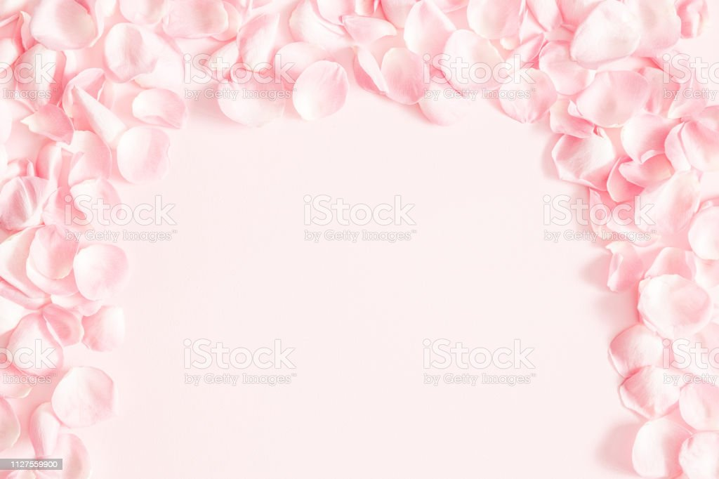 Flowers Composition Rose Flower Petals On Pastel Pink Background Valentines Day Mothers Day Womens Day Wedding Concept Flat Lay Top View Copy Space
