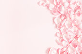 istock Flowers composition. Rose flower petals on pastel pink background. Valentines day, mothers day, womens day, wedding concept. Flat lay, top view, copy space 1128621641