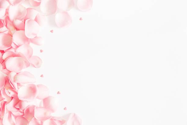 çiçek kompozisyon. beyaz arka plan üzerinde gül çiçek yaprakları. sevgililer günü, anneler günü kavramı. düz yatıyordu, en iyi görünüm, kopya alanı - taç yaprak stok fotoğraflar ve resimler