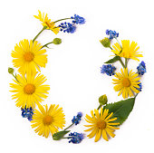 Flowers composition. Round frame made of yellow and blue flowers, eucalyptus branches on white background. Flat lay, top view, copy space.