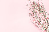 istock Flowers composition. White flowers on pastel pink background. Spring, easter concept. Flat lay, top view, copy space 1142359080