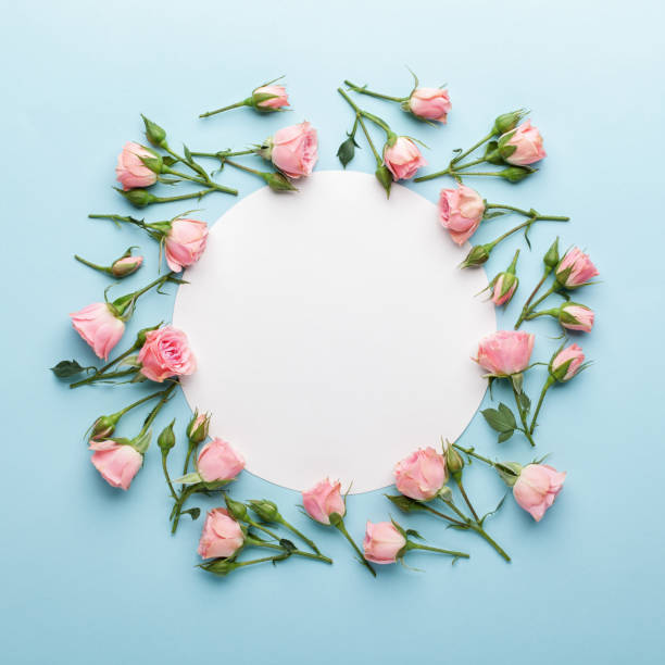 Flowers composition. Wreath made of pink rose flowers on blue background. stock photo