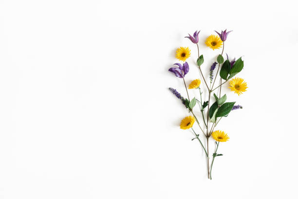 flowers composition. yellow and purple flowers on white background. spring, easter concept. flat lay, top view, copy space - флэтлей стоковые фото и изображения