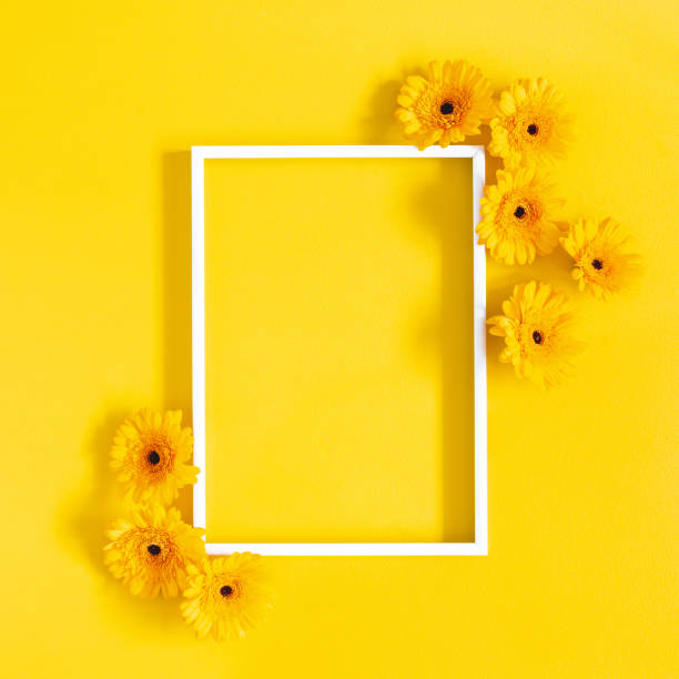Flowers composition. Yellow gerbera flowers, photo frame on yellow background. Flat lay, top view, copy space stock photo