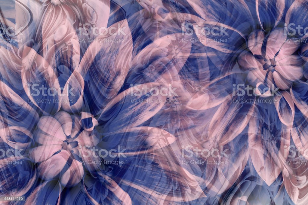 flowers dahlias gray-blue-pink. flowers  background. floral collage.  abstract composition. Nature. stock photo