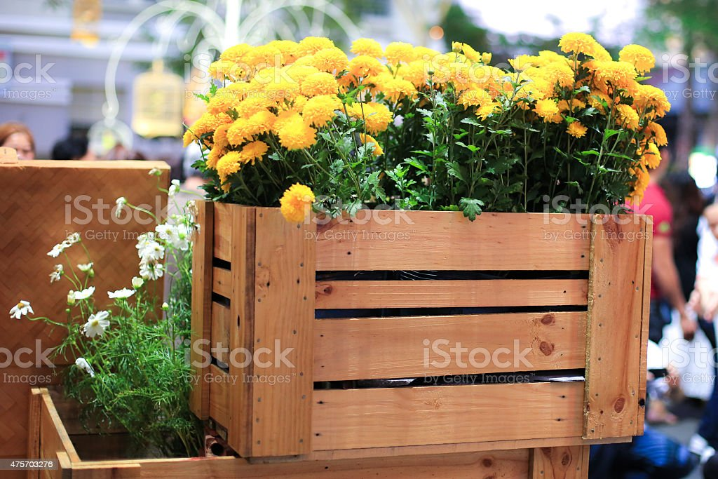 flowers daisy in wooden crate stock photo