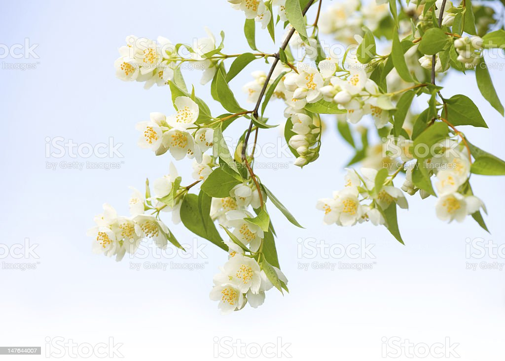 Flowers Design royalty-free stock photo