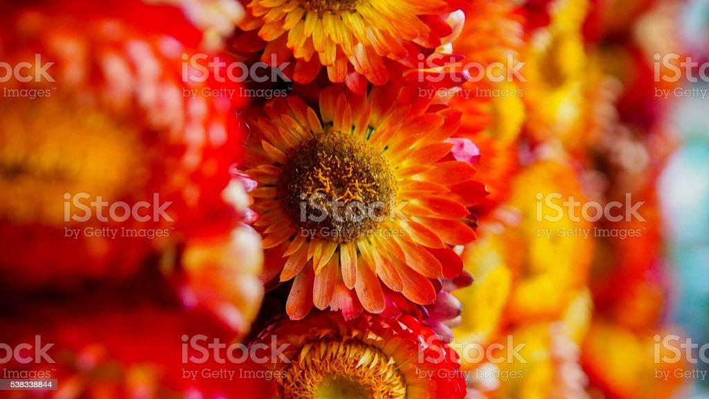 Flower's Dof stock photo