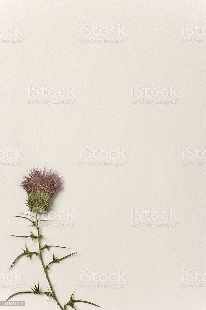 Flowers - Dried Thistle on Watercolor Paper. Full Frame. stock photo
